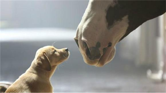 Budweiser Pulls Heartstrings with Puppies and Passenger