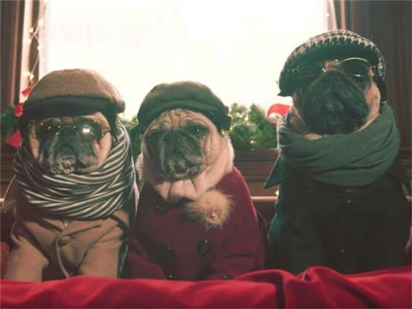 HEY DOG LOVERS: She & Him's Video for 'Winter Wonderland' is a Pug Dream
