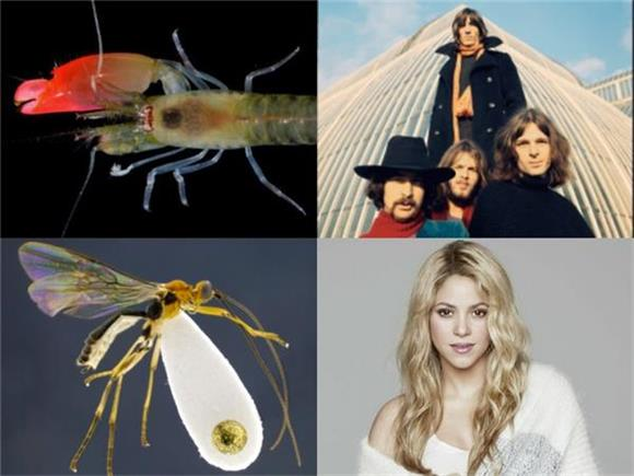 6 Organisms Named After Musicians