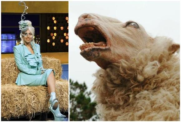Lady Gaga Fans Sound Like Zombie Sheep