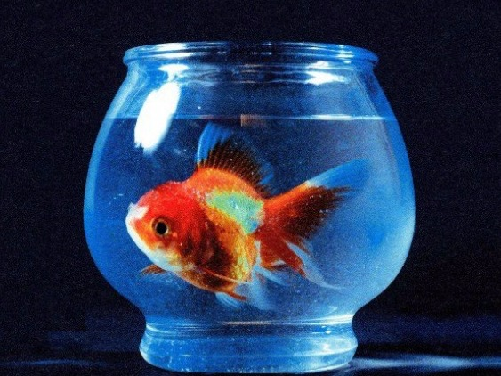The Epic Rise of Vince Staples: 'Big Fish Theory'