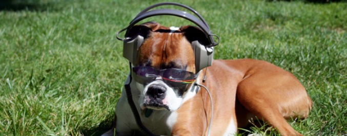14 Underdog Songs For The Dog Days Of Summer