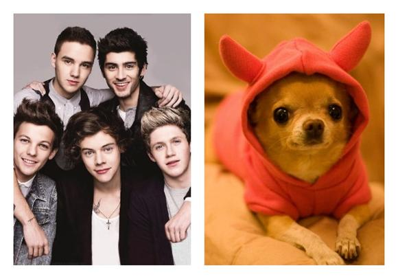 Insane Girl Killed Her Dog For One Direction