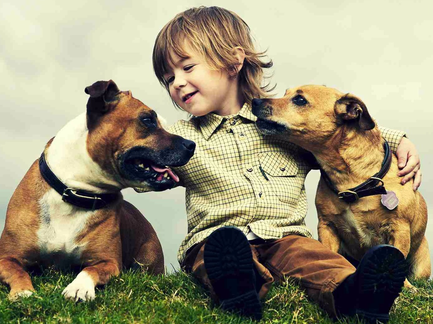 12 Songs For Every Pet Lover Baeble Music
