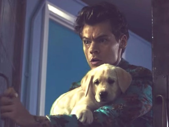 Harry Styles' 'Kiwi' Video Is Filled With Pups, Pies, And A Mini Version Of Himself