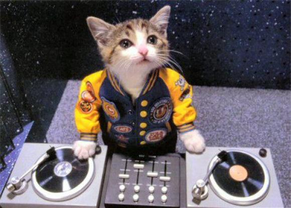 Watch: Kittens Play DJ