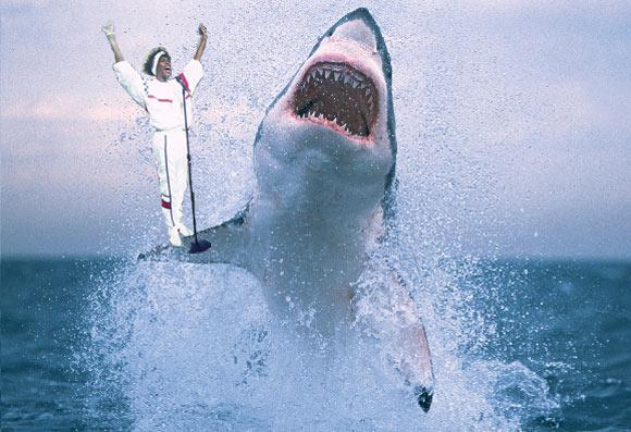 Celebrate Mother Nature's Merciless Killing Machines with 'I Will Always Love Sharks'